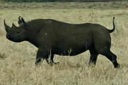 RhinoTanzania_BradLibbey.jpg