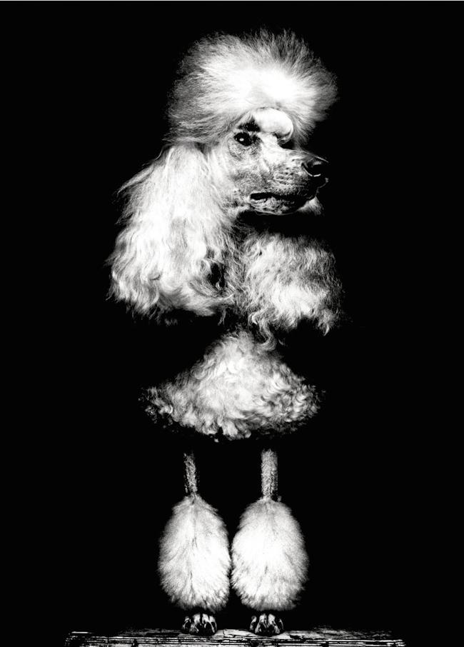 GARAGE MAGAZINE Deep Breeding by Platon. Charlotte Stockdale, Fall 2014, www.imageamplified.com, Image Amplified