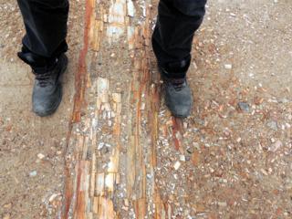 Petrified Logs in Northern Arizona - INSERT3b