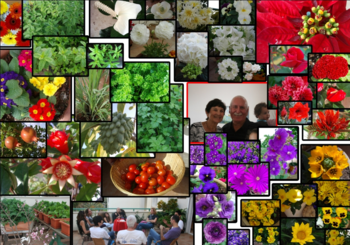 Fresh produce demonstration (2)