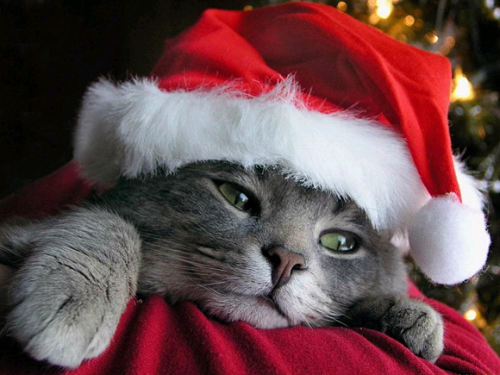 Christmas-cat-wallpaper-l