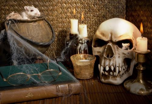 Halloween-rodents_SEPTEMBER-2014