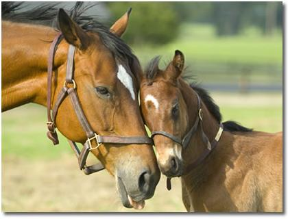 Familia de cavallos