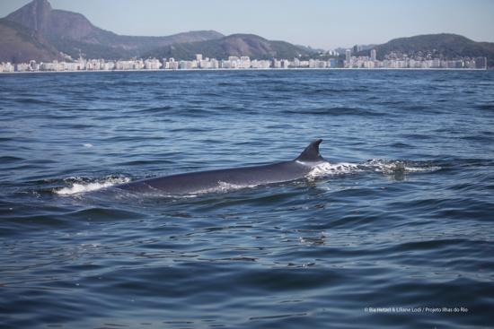 Baleia bryde copa agua suja BIA HETZEL menor