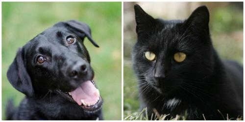 Black-cat-dog-blog
