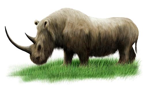 Woolly-rhino-BLOG-500x500