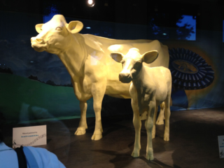 Famous butter cow