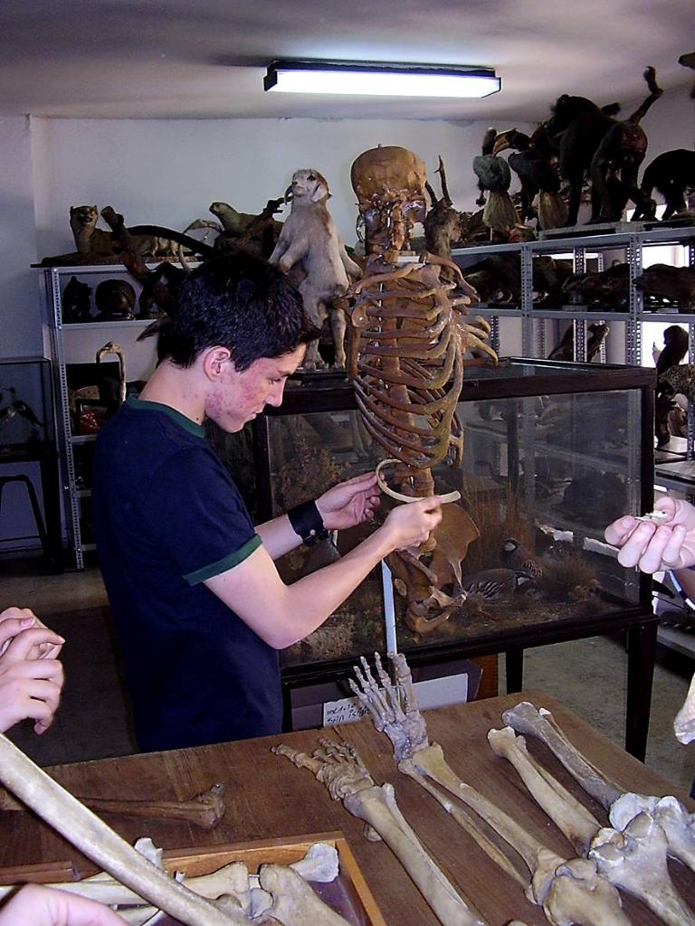 Estudiantes del IES 'San Isidro' en tareas de restauración de los fondos del Museo | Rafael Martín Villa