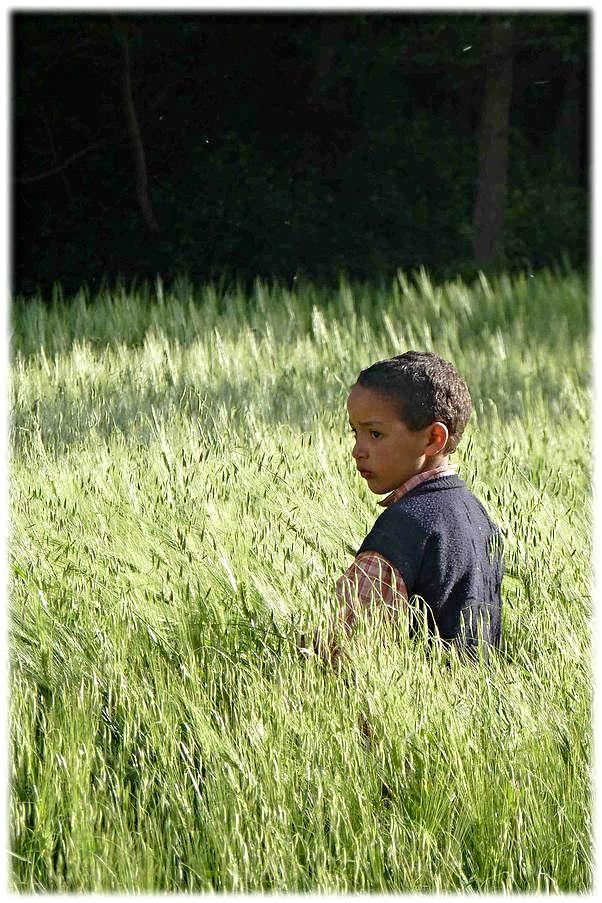 Escondite.  Jugando al escondite entre cereales. Imagen presentada a la exposición: 'El péndulo en tu mirada'
