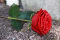 Rose-167673_640