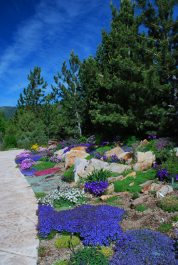 Betty Ford Alpine Gardens 2