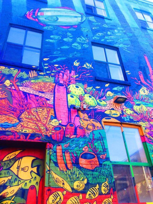 photo of graffiti on Queen Street depicting colourful fish