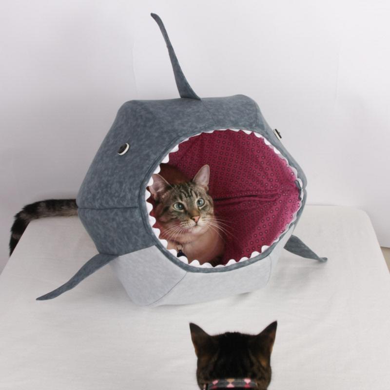 shark cat ball